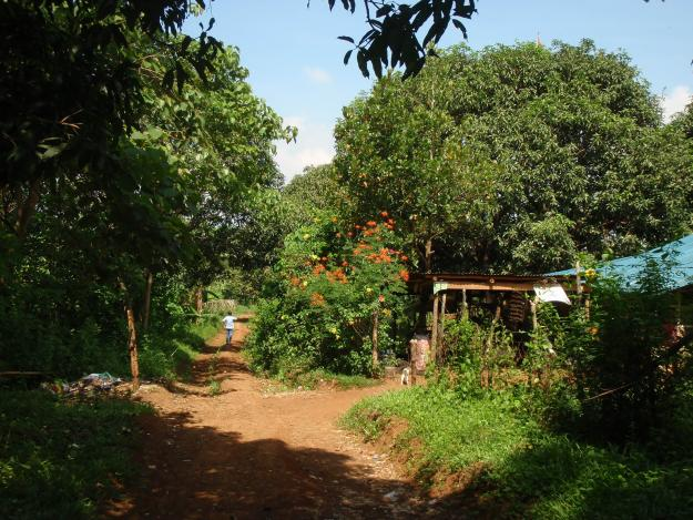 1287429624_129922050_10-Farm-Lot-with-Fruit-Bearing-Trees-for-sale-Land-1287429624